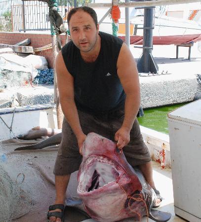 Antalyada dev köpekbalığı