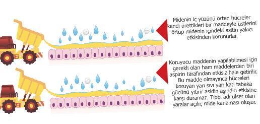 sertlestirici bitkisel yaglar