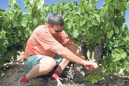 Kırmızı Çoraplı şarap adamı