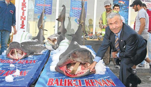 İstanbul Boğazı'nda üç köpek balığı yakalandı