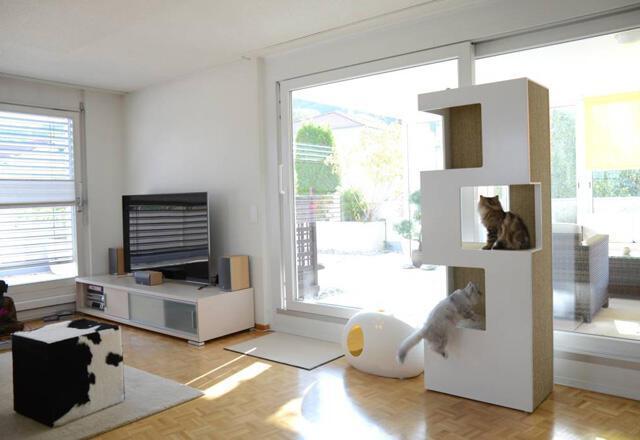 Eviniz kedinize uygun mu