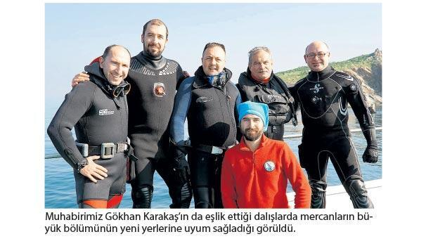Göç ettirilen mercanlardan iyi haber geldi İnsandan uzakta hayat buldular
