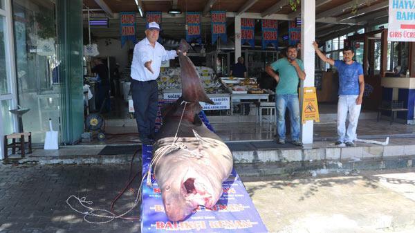 1 ton 200 kiloluk köpekbalığı yakalandı