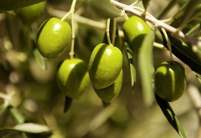 Evde yeşil zeytin nasıl yapılır