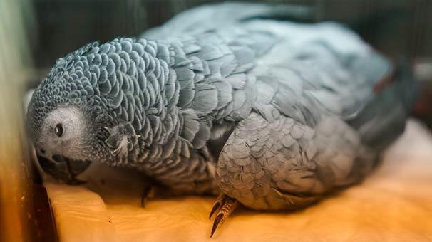 Son dakika... Murat Özdemirin işkence ettiği papağandan kötü haber geldi