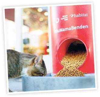 Tweet at, sokak hayvanına mama ver