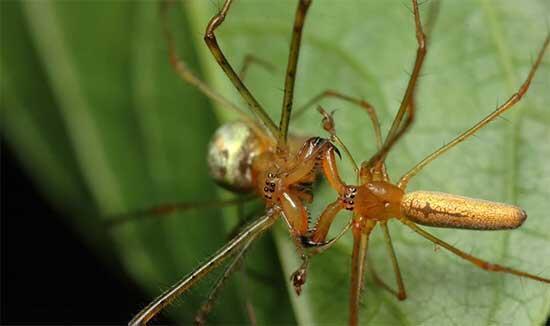 Yunanistanda 300 metrelik devasa örümcek ağı görüldü