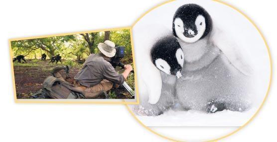BBC Earth'ten hayvanların dünyası