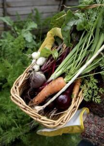 Bahçenizde kış sebzeleri yetiştirin