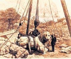 İngiltere'deki Anadolu Aslanı
