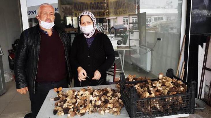 Kurutulmuş kuzugöbeği mantarı 800 liraya satılıyor - Son Haberler ...Denizli Çameli ilçesinde de ikamet eden ve girişimci bir ruha sahip İsmail Karaca, ilçelerinde yetişen bahar ayı ile beraber toplanmaya başlanan kuzu göbeği mantarını, kilogramını 80 ile 150 ₺ arasında aldığını söylüyor. Ancak bu mantar türünü kuruttuktan sonra ise yaklaşık 800 ₺ fiyattan yedi farklı ülkeye ihraç ettiğini belirtiyor.