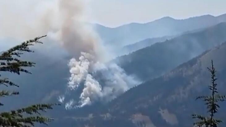 Adana Feke'de orman yangını - Güncel Haberler Milliyet