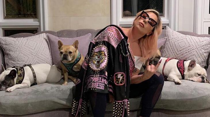Lady Gaga'nın köpek hırsızlığı olayında 1 kişi daha tutuklandı thumbnail
