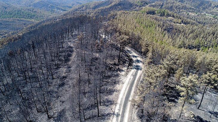 SON DAKİKA : Yangından etkilenenlere yardım! 10 bin lira hesaplara yattı...