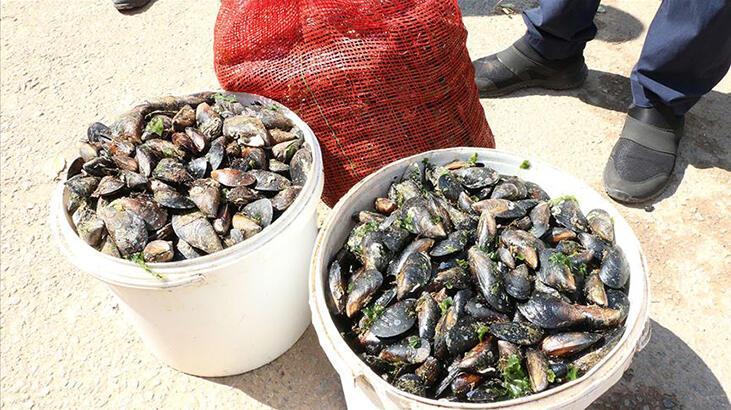 SON DAKİKA: Diyanet'ten deniz ürünleri açıklaması! Midye, yengeç, ıstakoz, karides...