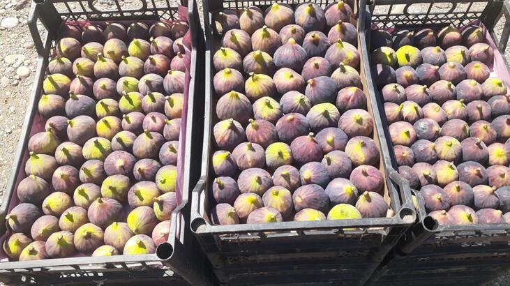 İnhisar'da üretilen incirler büyükşehirlerde tezgahları süslüyor