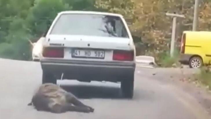 Domuzu otomobilinin arkasına bağlayıp sürükledi!
