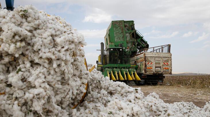Diyarbakır'da bu sezon 250 bin tonun üzerinde pamuk rekoltesi bekleniyor