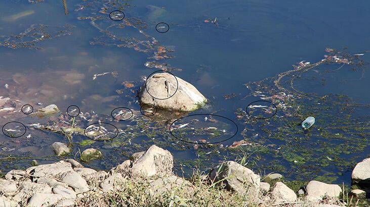 Su seviyesi azalan Dicle Nehri'nde ölü balıklar kıyıya vurdu thumbnail