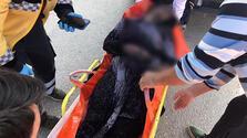Facia! 3'ü çocuk 4 kişi hayatını kaybetti
