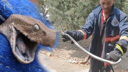 Mersin'de yılan paniği! Evin mutfağından 2 metrelik yılan çıktı