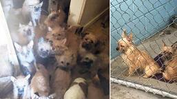 Son dakika: Evden çıkan kiracı arkasında 85 köpek ve 9 kedi bıraktı