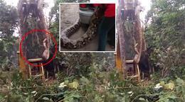 Sosyal medya bunu konuşuyor! 79 milyondan fazla izlenen 'devasa yılan'