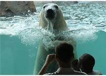 Ben çocuğumu hayvanat bahçesine götürmüyorum