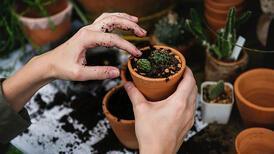 Eylül ayında balkona ve bahçenize ekebileceğiniz bitkiler
