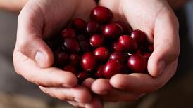 Cranberry veya Ayı Üzümü