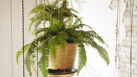 Banyonuzun havasını temizleyen 6 bitki