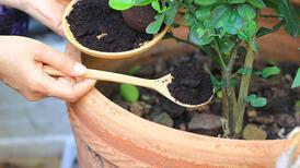 Bitkiler için 5 doğal gübre yapımı