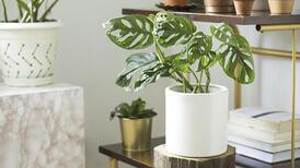 Evde bitki yetiştirmek için 7 önemli neden