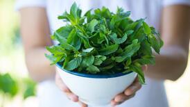 Vücudunuzu tepeden tırnağa onaran 10 baharat ve bitki