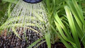 Aşırı su verilen bitkileri kurtarmanın püf noktaları