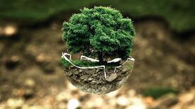 Ekoloji nedir? Biyolojide ekolojinin kısaca tanımı