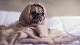Köpekler nasıl sakinleştirilmeli?