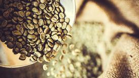 Yeşil kahve neden diğer kahvelerden daha faydalı?