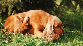 Köpeğiniz sürekli kaşınıyor mu?