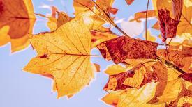 Sonbahar haritasında neler var?