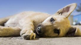 Sokak hayvanları nelerle karşılaşıyor? Hayvan haklarının önemi nedir?