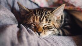 Evcil hayvanı olanlar pandemide nelere dikkat etmeli?