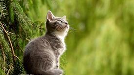 Kediler Kaç Yıl Yaşar? Kedilerin Ortalama Ömrü Ve Kendine Has Özellikleri