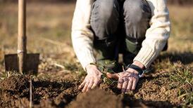 Aralık ayında yapmanız gereken bahçe işleri
