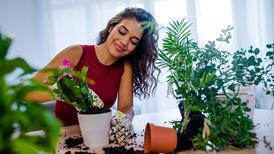 Ev bitkilerine kışlık bakım