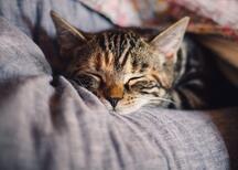 Kediler Nasıl Uyur? Kediler Ne Kadar Uyur, Neden Çok Uyurlar?