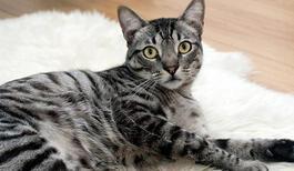 Kedi Nasıl Yıkanır? Kedi Yıkamak İçin Nelere Dikkat Edilmelidir?