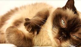 Kedi Tırnağı Nasıl Kesilir? Kedi Tırnağı Ne Zaman, Neden Kesilir?