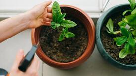 Evde bitki bakımını kolaylaştıracak 12 pratik öneri