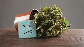 Ölmek üzere olan bir bitkiyi canlandırmak için 6 ipucu